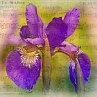 Flower Song by MotherNature2