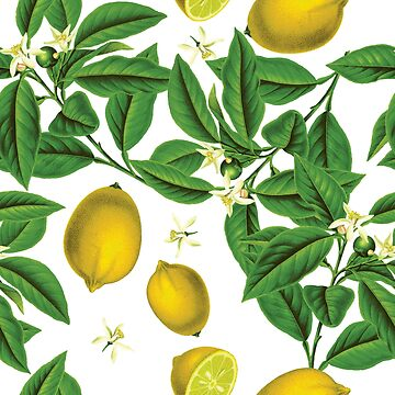 Lemons II - botanical illustration pattern by gifrancis