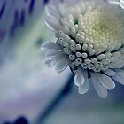 Touch of blue. by Daniii
