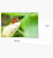 Red Soldier Beetle Postcards