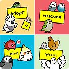 Adopt a Rescued Bird!  by birdhism
