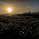 Nature Landscape by Paul Bird
