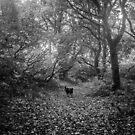 Monochrome Dog Among Trees by Paul Bird