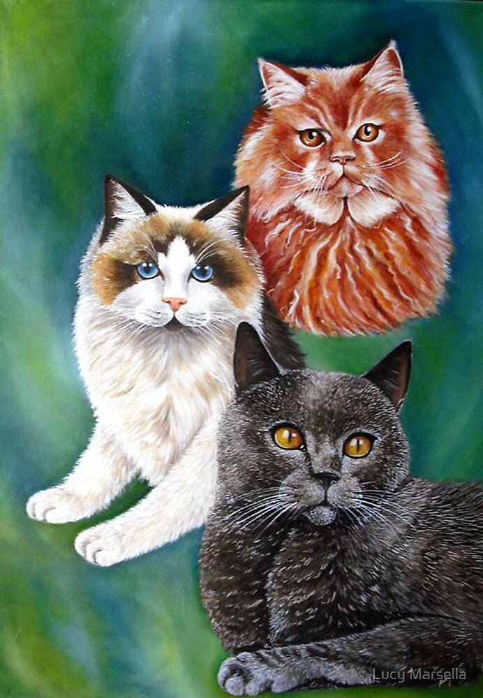 Beautiful Cats by Lucy Marsella