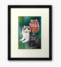 Beautiful Cats Framed Print