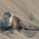 Sandbank with otter by Anthony Brewer