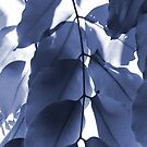 Leaves V by Lilac Laron