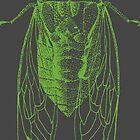 Cicada by Rich Anderson