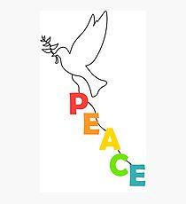 pigeon dove world peace Photographic Print