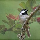 Chickadee amid the blossoms by Bonnie T.  Barry