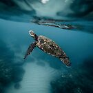 Loggerhead Sea Turtle Shell Marine Habitat by thespottydogg