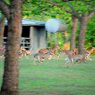 Deer in Flight by BonnieColeman