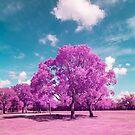 Florida's nature in infrared light by Adam Nixon