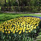 Bed of Yellow Tulips in the Keukenhof Gardens von BlueMoonRose