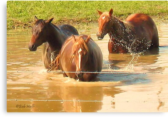 """HORSES WITH ATTITUDE NO. 5, """"HEY YOUSE GUYS, I'M STILL TALKIN',"""" Photo, for prints and products        by Bob Hall©"""