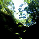 Jungle Reflections by Reef Ecoimages