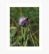 6 spot burnet moth Art Print