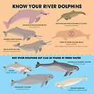 « Know Your River Dolphins » par PepomintNarwhal