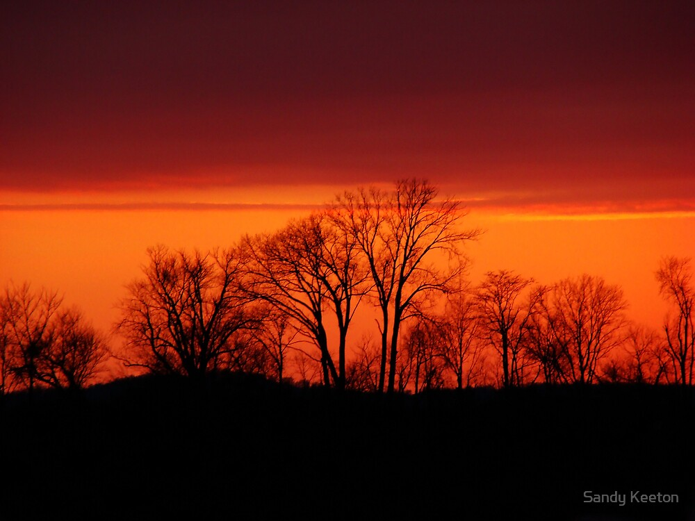 Trees at Sunset by Sandy Keeton