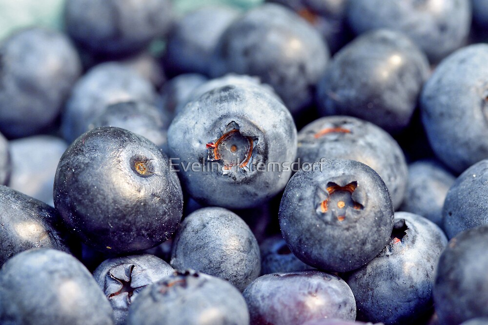 Blueberries by Evelina Kremsdorf