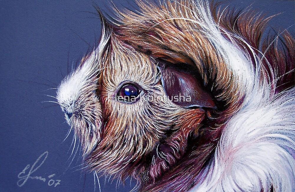Bibble the guinea pig by Elena Kolotusha