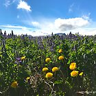 Rif's Lupine in Iceland by AHELENE