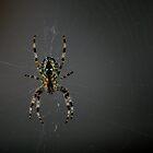 Spider by Al Williscroft