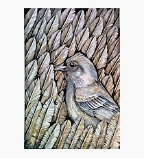 Feather pattern Photographic Print
