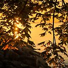 Cyber Yellow Sunset Through the Maple Screen by Georgia Mizuleva