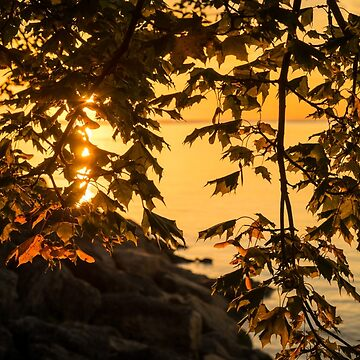 Cyber Yellow Sunset Through the Maple Screen by GeorgiaM