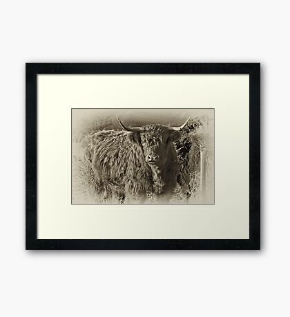 Highland Coo #2 Framed Print