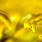 Leaf-In-Flight © Vicki Ferrari by Vicki Ferrari