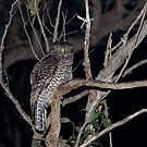 Powerful Owl by Biggzie