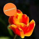 « Félicitations Orange vibes » par Delphine Comte