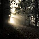 Crazy Light by Patrice Mestari