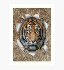 Bengal Tiger in Action Art Print