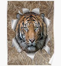 Bengal Tiger in Action Poster