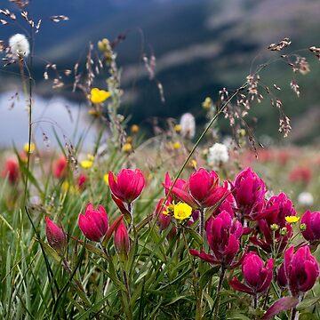 Wild Flowers by valentina9