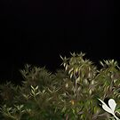 Rhododendron at Night by Laurawrites