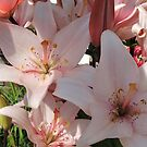 Pink Lilies In Shadow by CreativeEm
