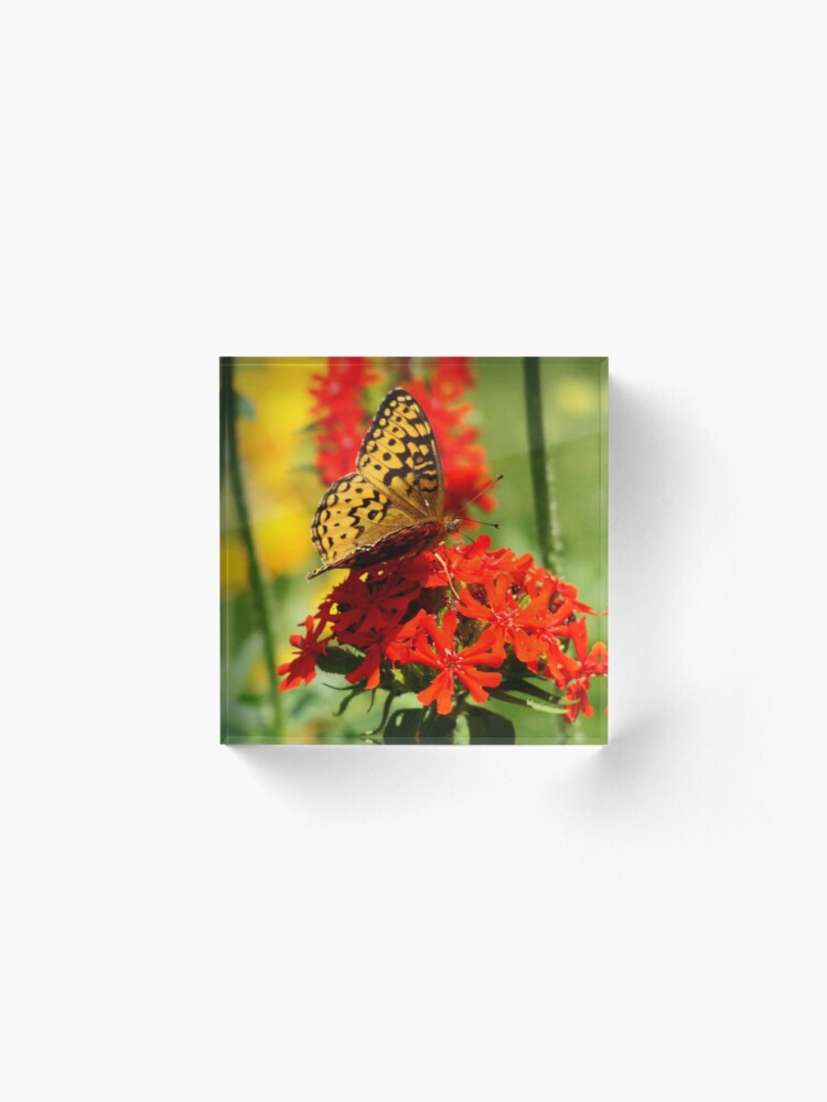 Alternate view of Gold Winged Butterfly on an Orange Flower Acrylic Block