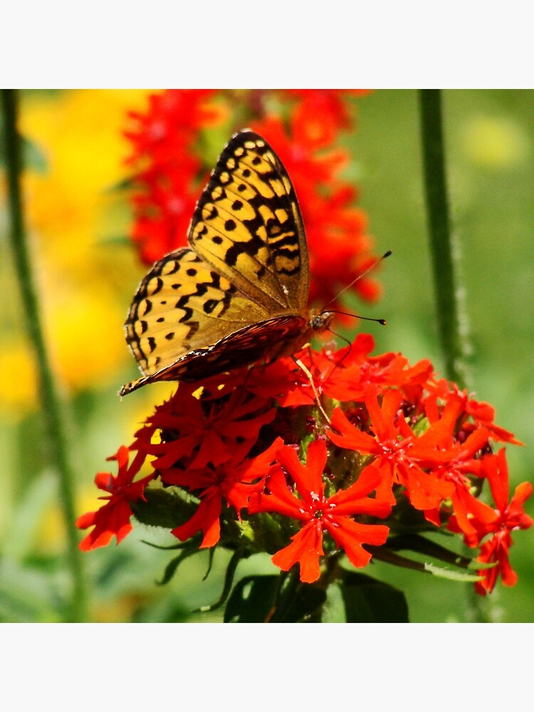 Gold Winged Butterfly on an Orange Flower by elaine226