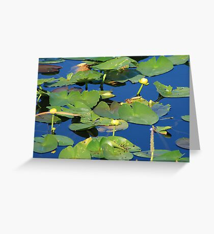 Everglades Lily Pads Greeting Card