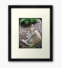 Buddy the Cat Framed Print