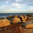 Küstenskulpturen von Harry Oldmeadow