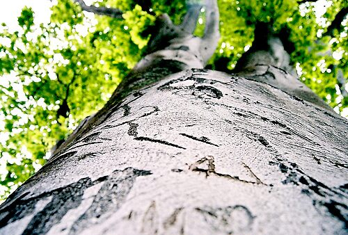 Tree Trunk Art by tmtphotography