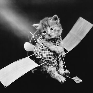 The Aviator Cat - Harry Whittier Frees by warishellstore