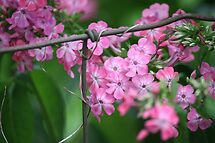 Blooms on a Wire... Fence That Is!! by Cathy Cale