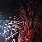 Reeds at waters edge by TLCGraphics