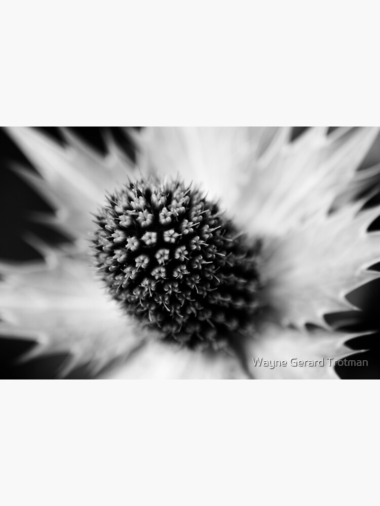 Heart of the White Explosion in Monochrome by redmoondragon